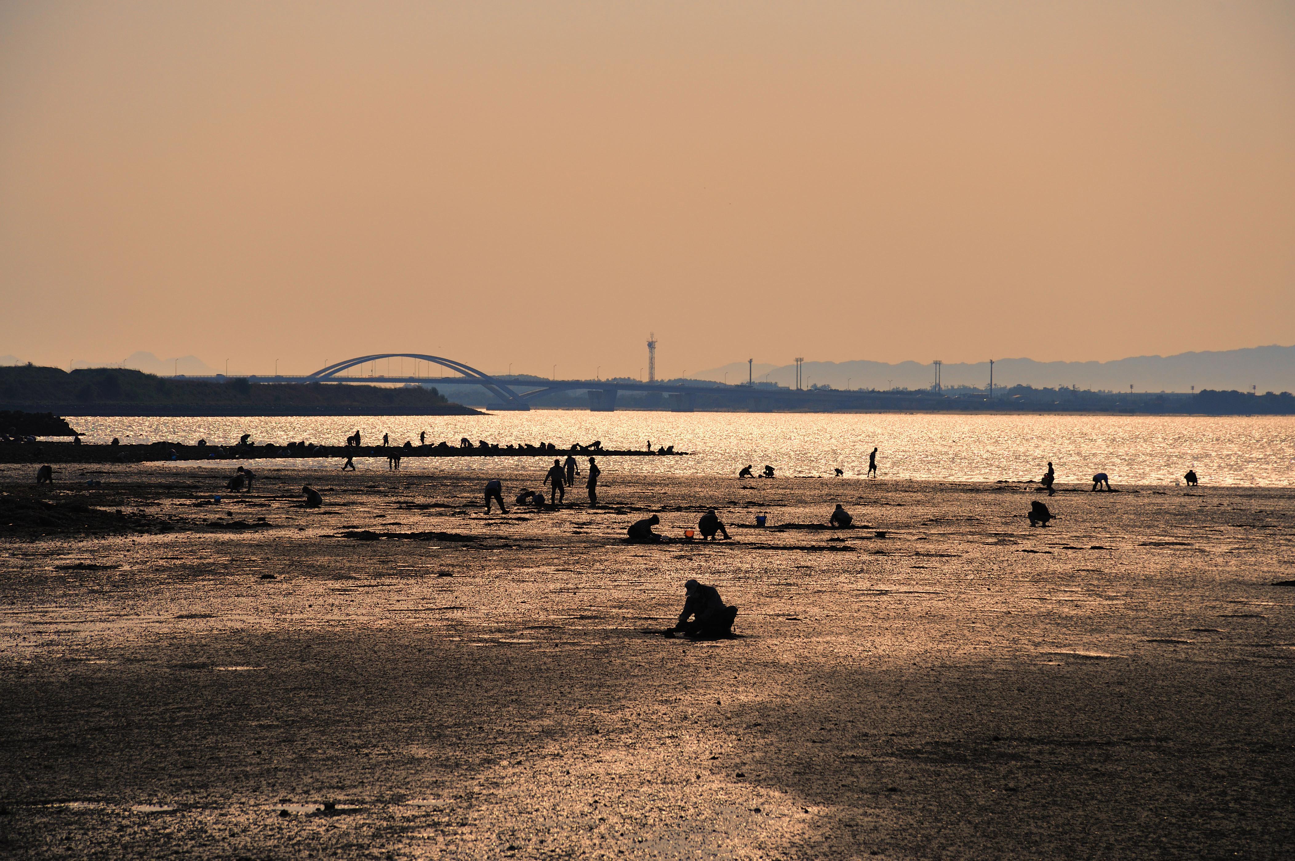和白干潟(2009)の画像