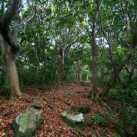 能古島・思索の森(2009)の画像