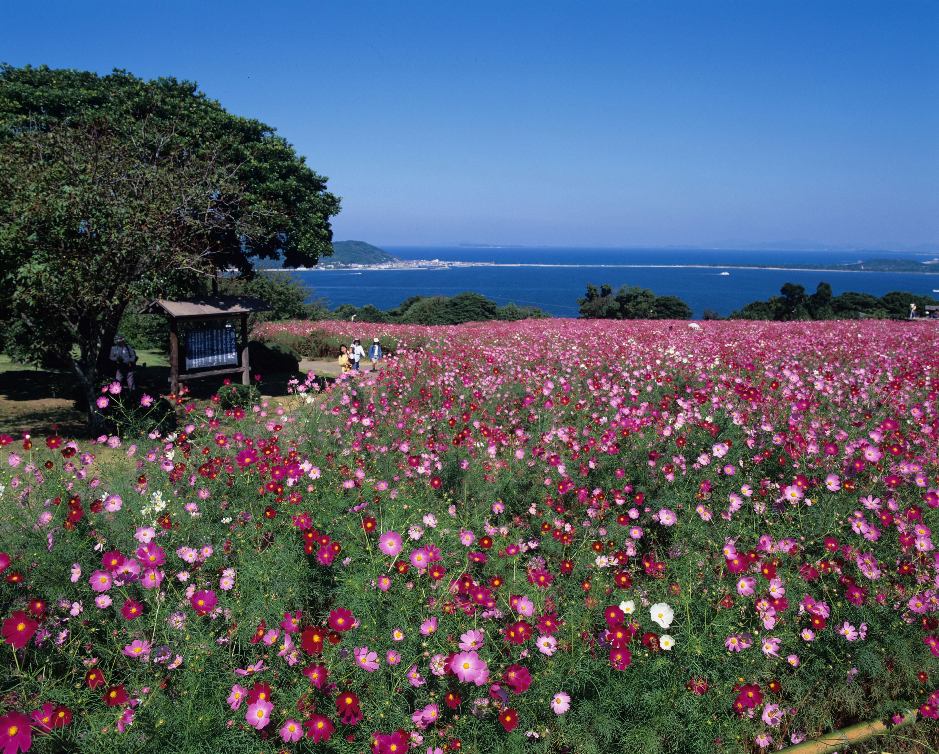 能古島・アイランドパーク パノラマ花畑(撮影年不明)の画像