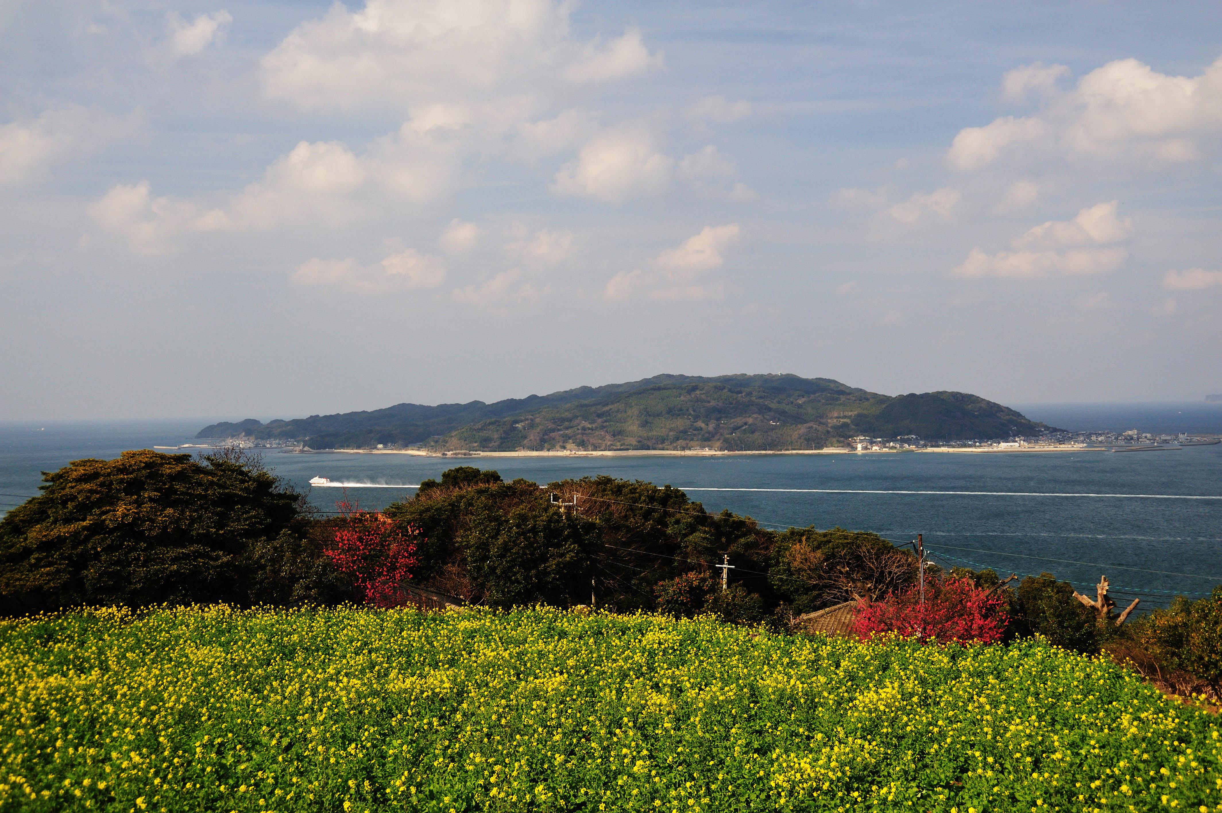 能古島・アイランドパーク 菜花(2009)の画像