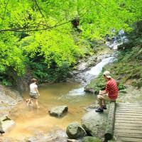 油山市民の森(2006)の画像