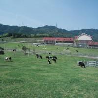油山牧場(撮影年不明)の画像