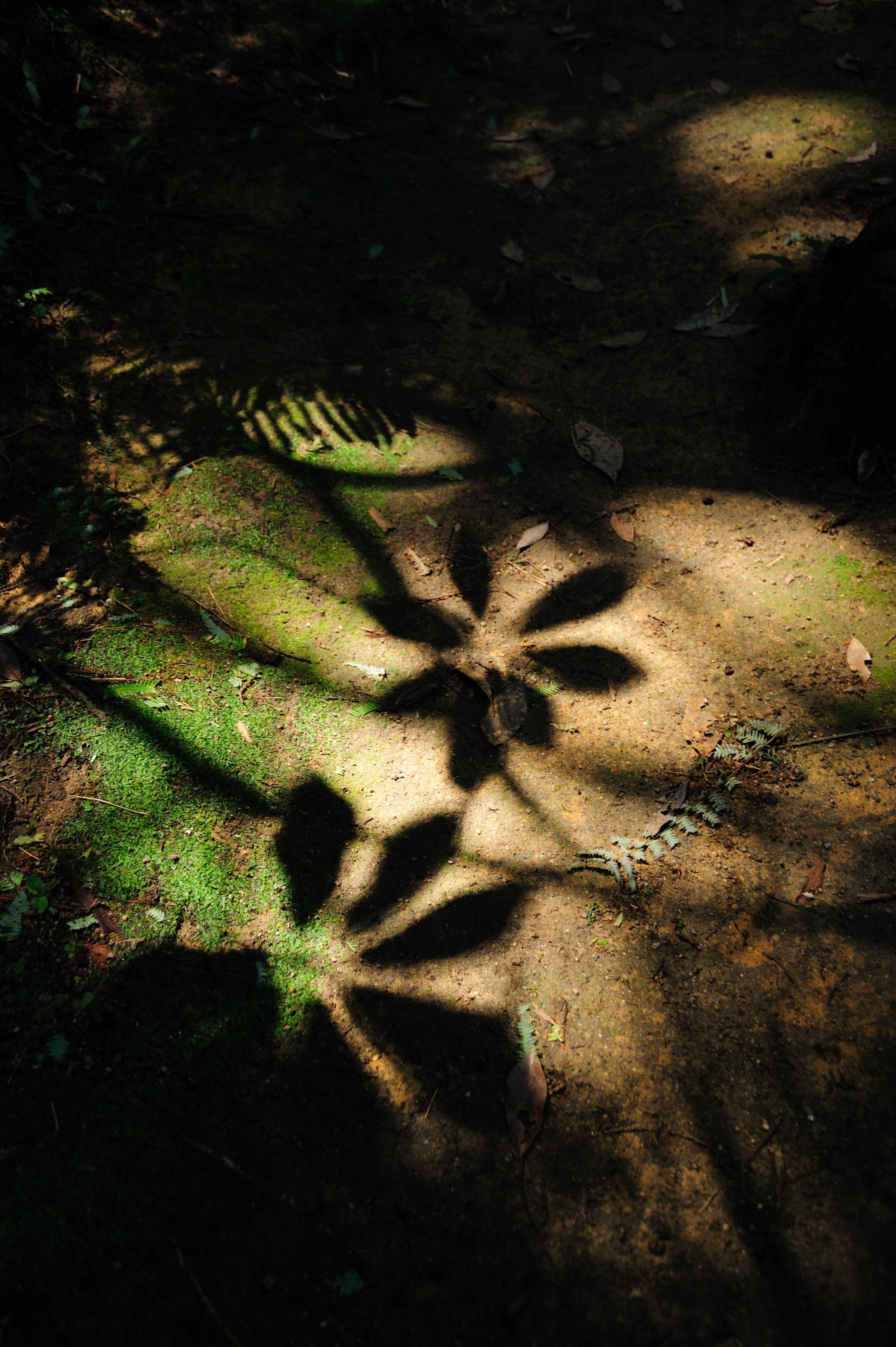 油山市民の森(2009)の画像