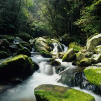 野河内渓谷(撮影年不明)の画像