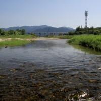 室見川中流(2009)の画像