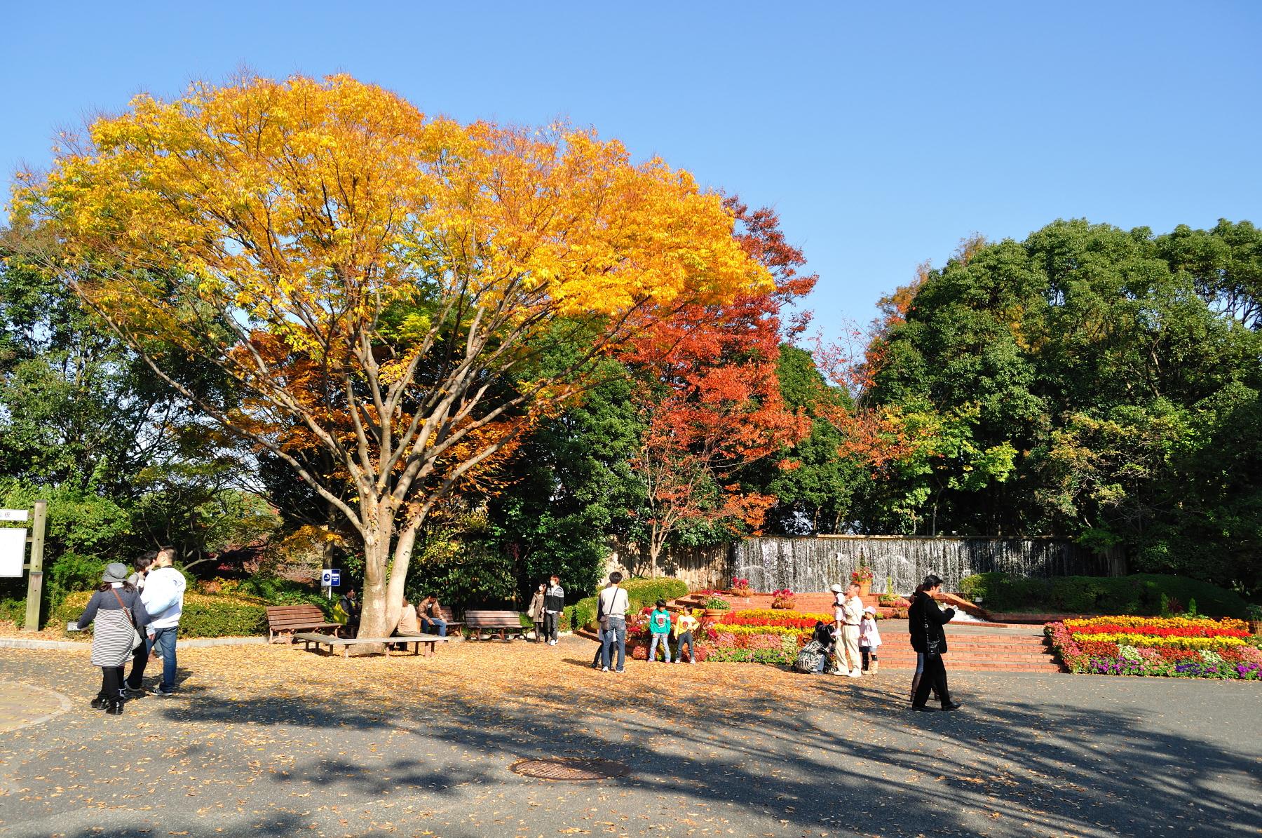 植物園(2010)の画像