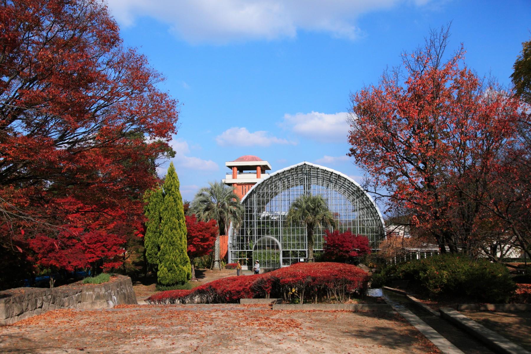 花畑園芸公園(2010)の画像