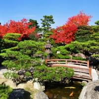 大濠公園・日本庭園(2010)の画像