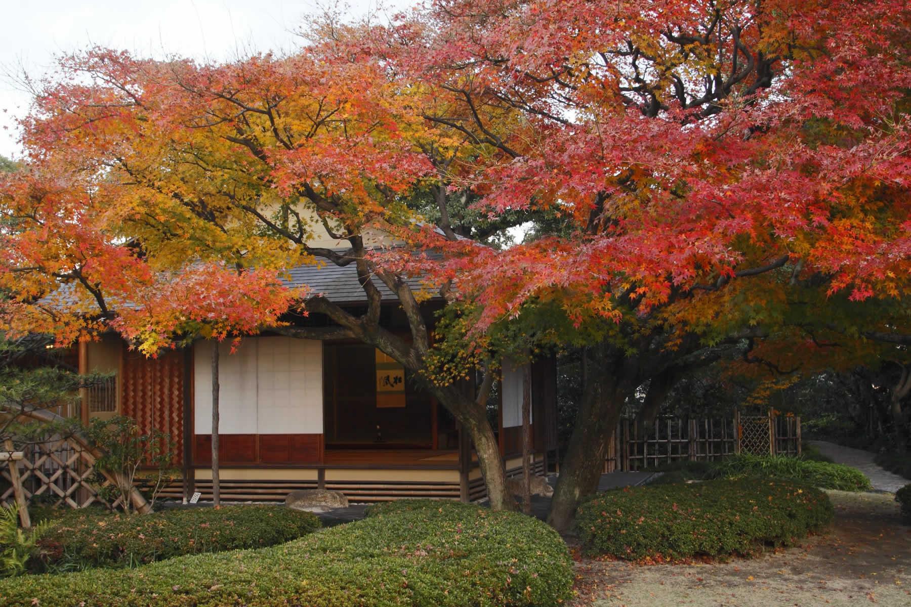 松風園(2010)の画像