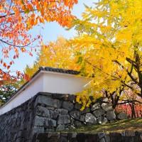 舞鶴公園・福岡城跡(2010)の画像