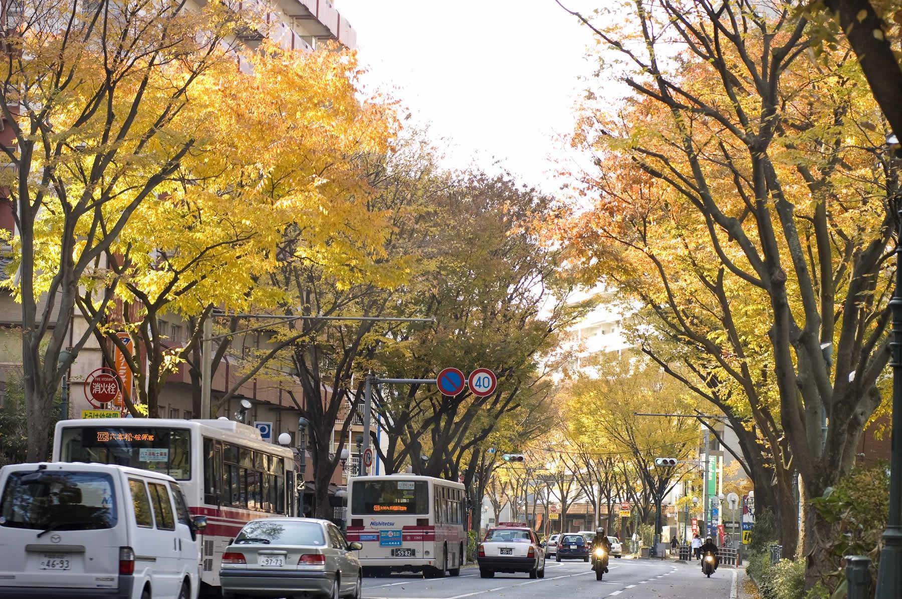 けやき通り(2007)の画像