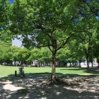 天神中央公園(2009)の画像