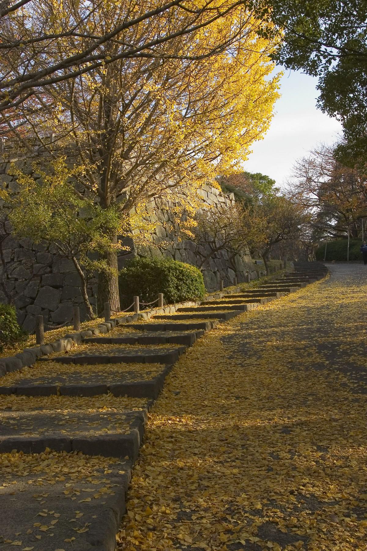 Image of Maizuru Park(2005)