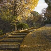 舞鶴公園(2005)の画像