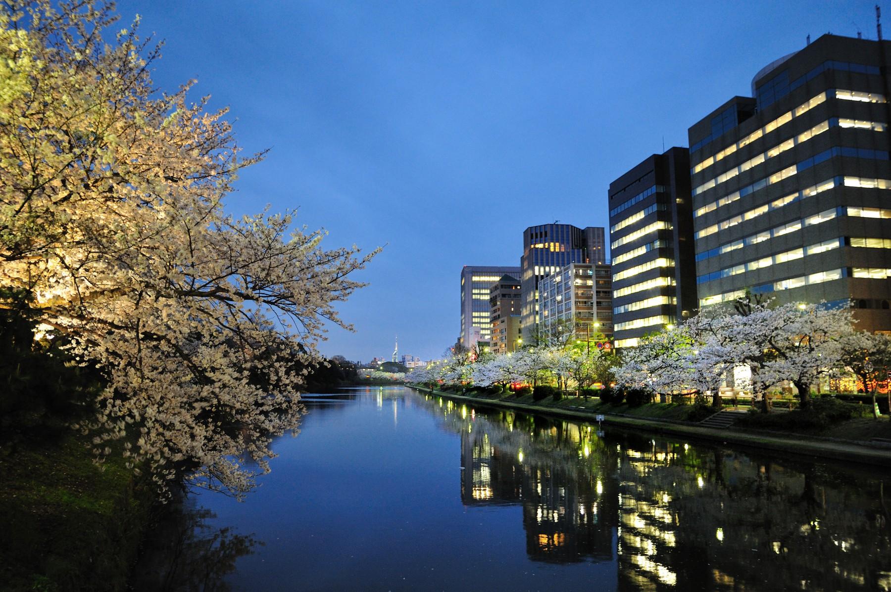 舞鶴公園の堀端(2009)の画像