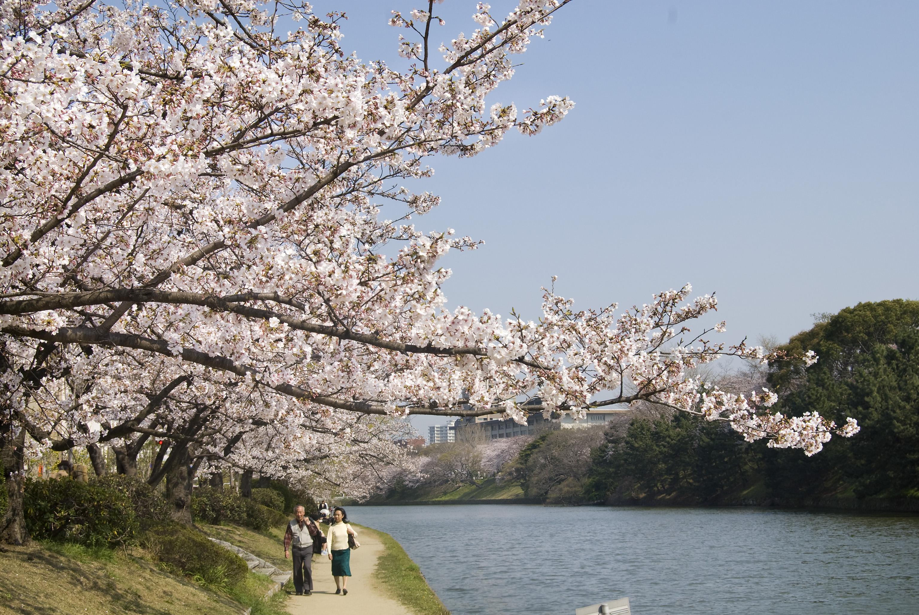 舞鶴公園の堀端(2008)の画像