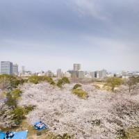 舞鶴公園(2008)の画像