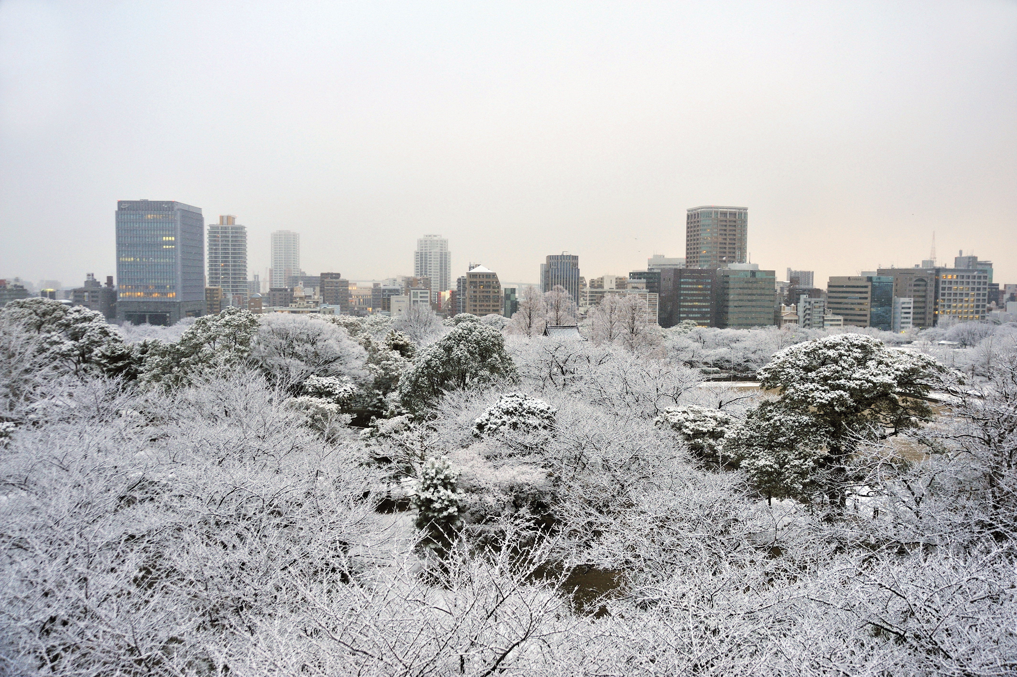 舞鶴公園(2009)の画像