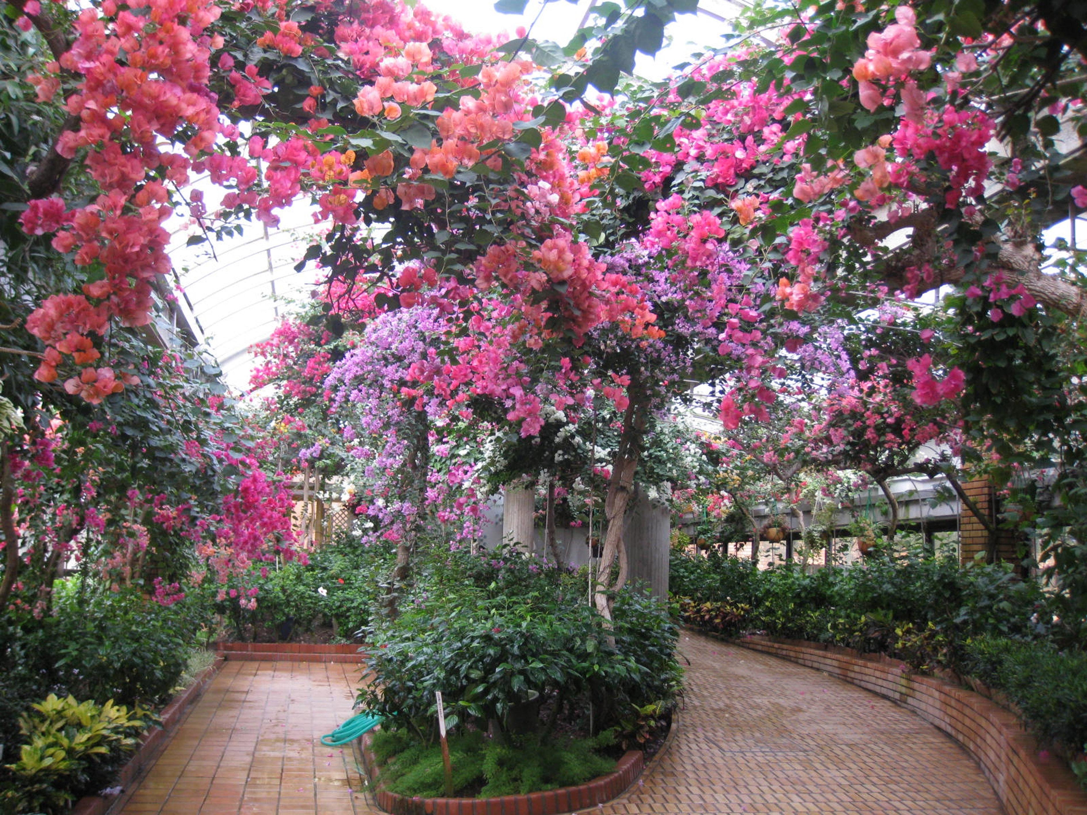 植物園温室(2009)の画像