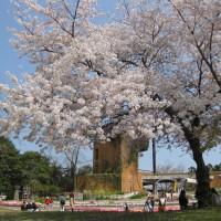 植物園(2009)の画像