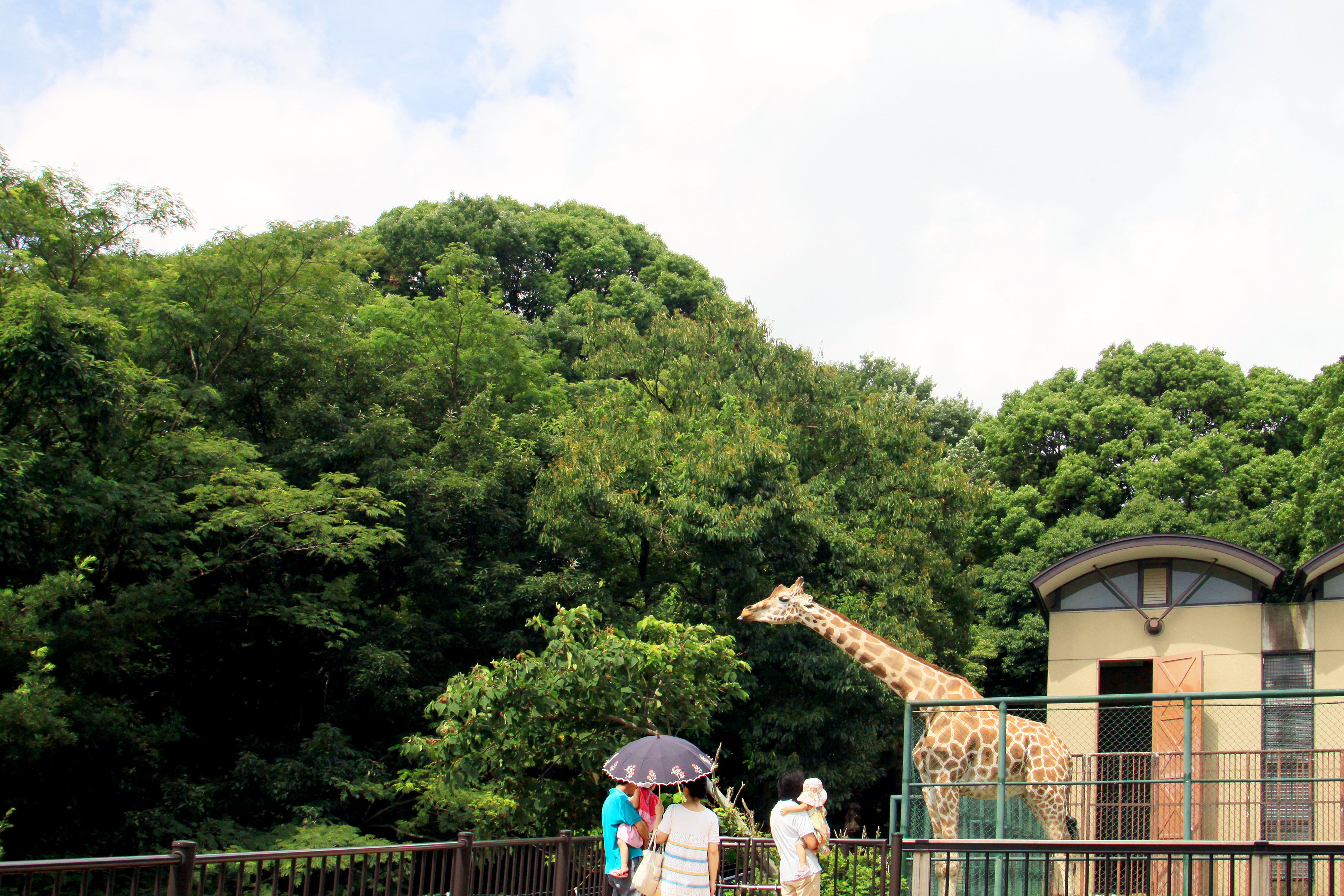 動物園(2009)の画像