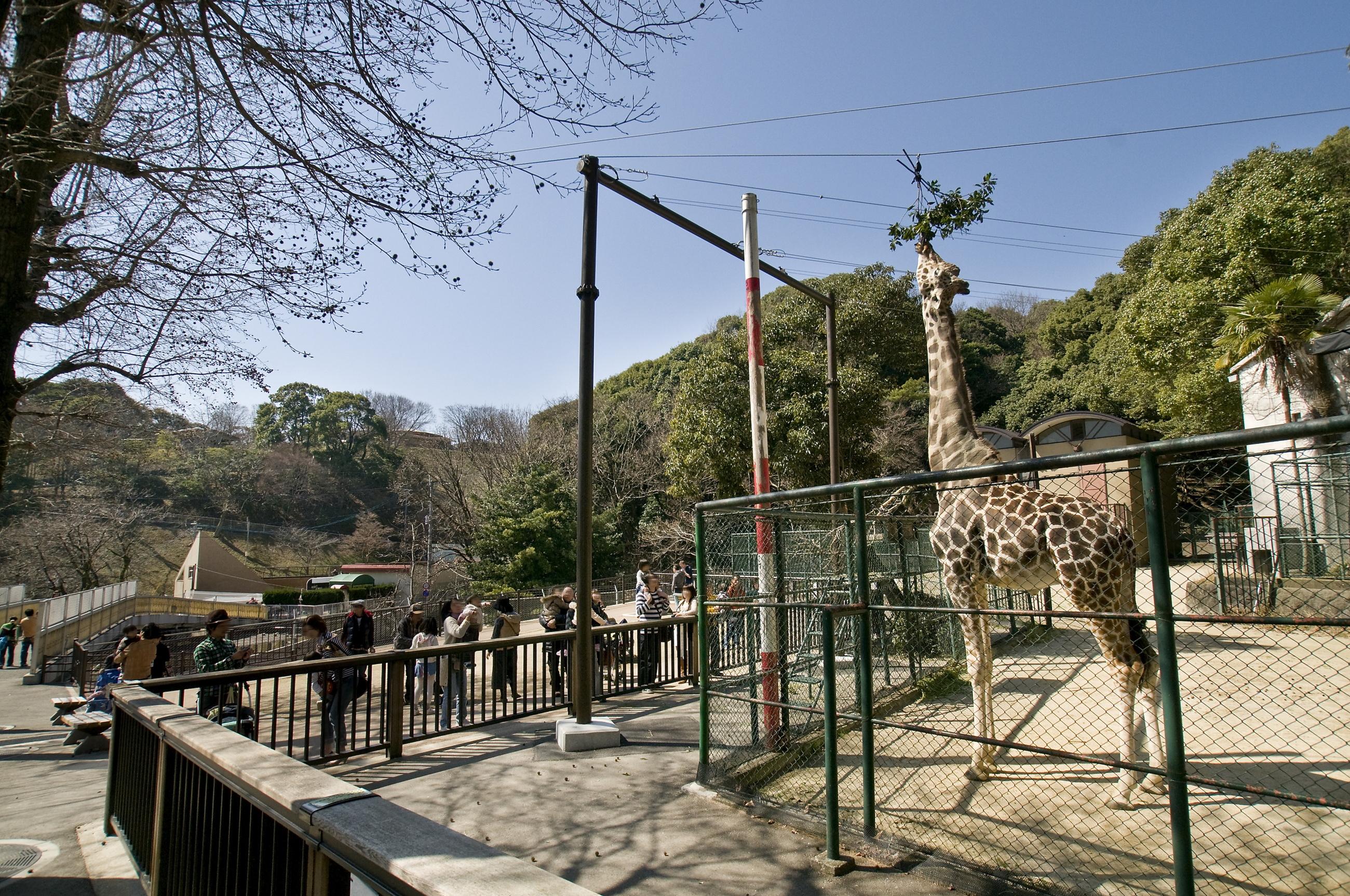 動物園(2010)の画像