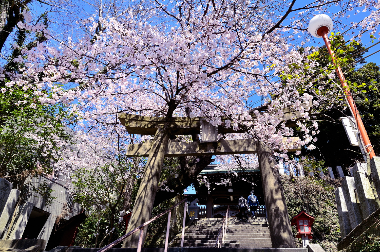 愛宕神社(2010)の画像