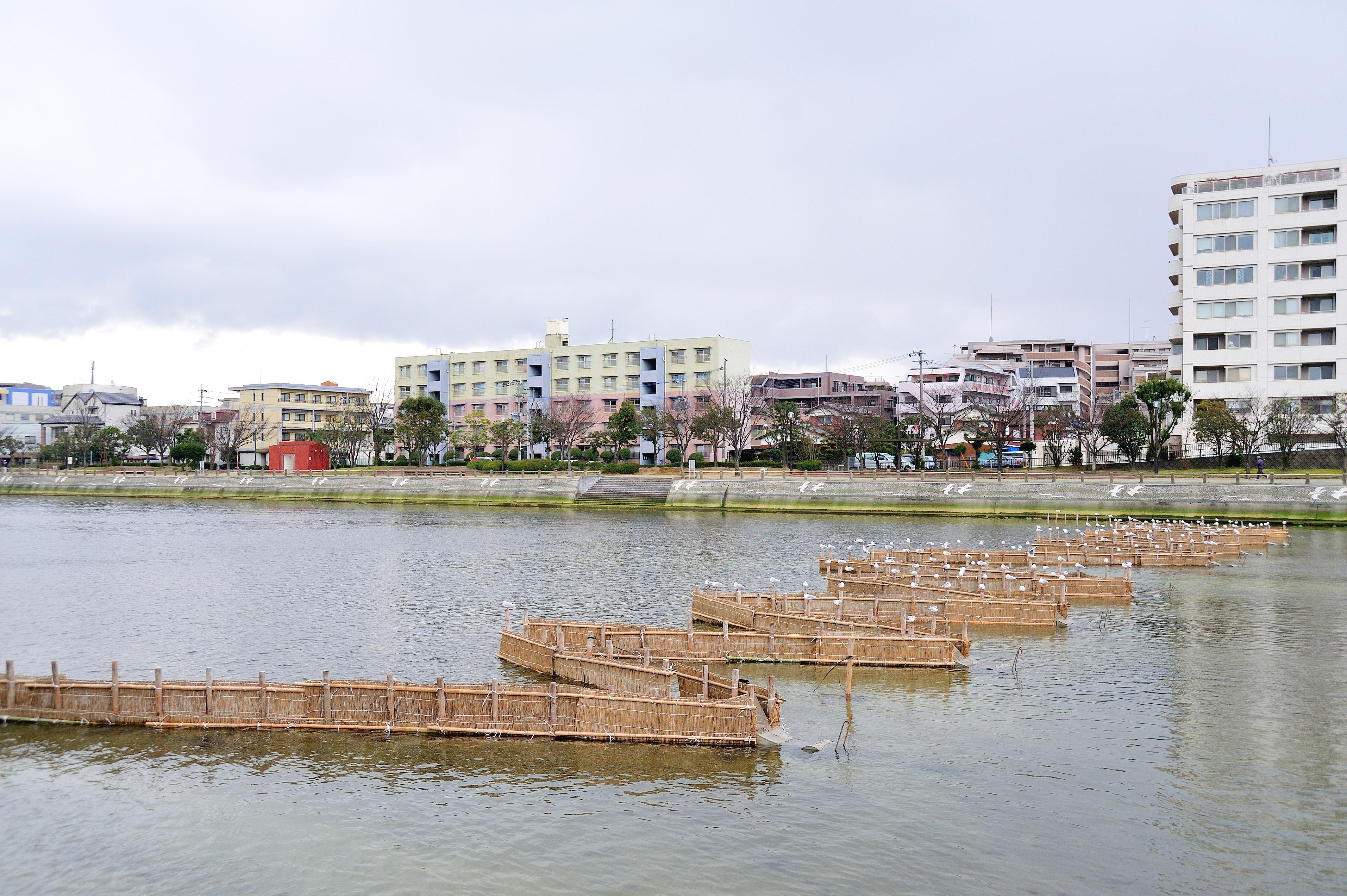シロウオ漁(2009)の画像