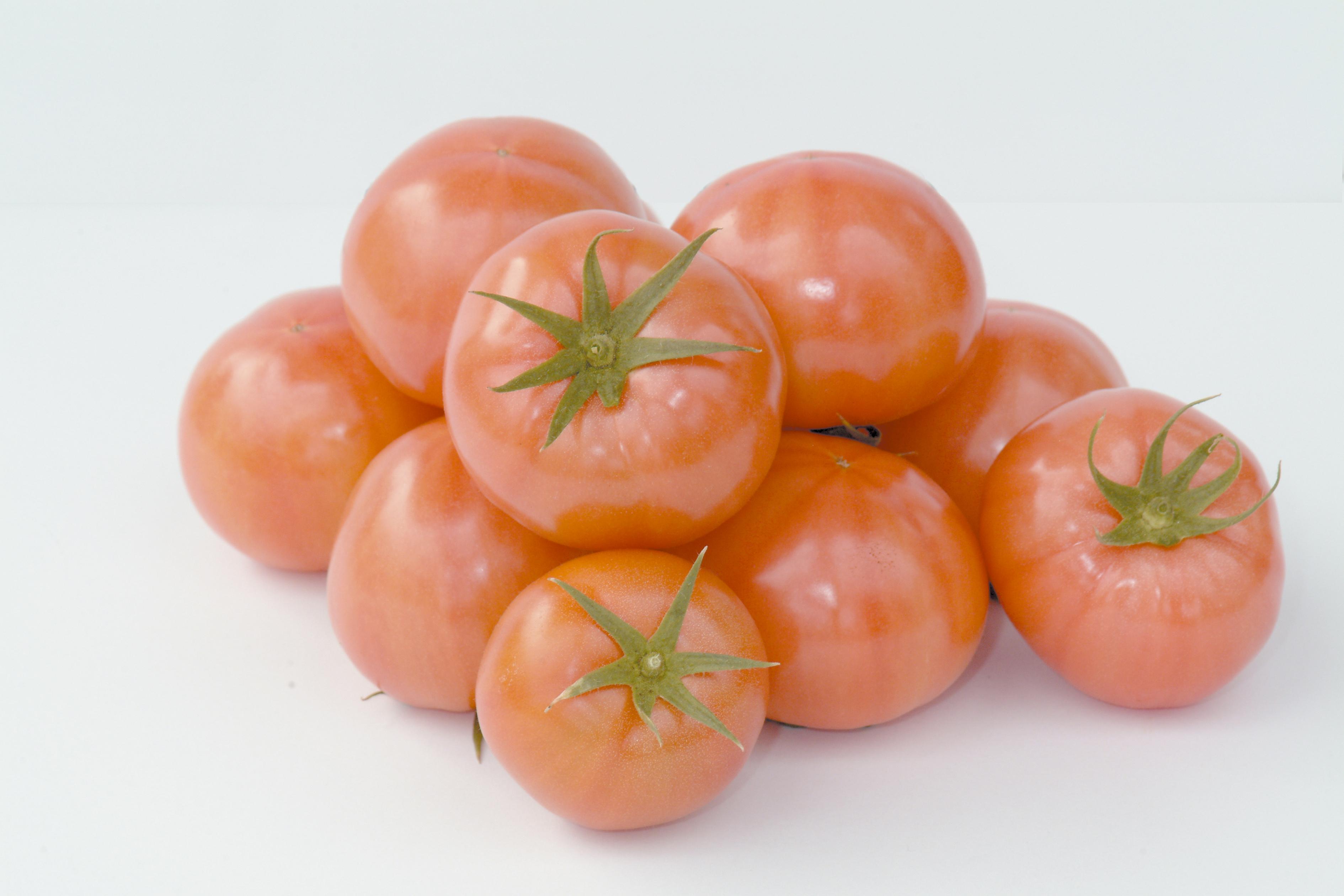 れき耕栽培のトマト(撮影年不明)の画像
