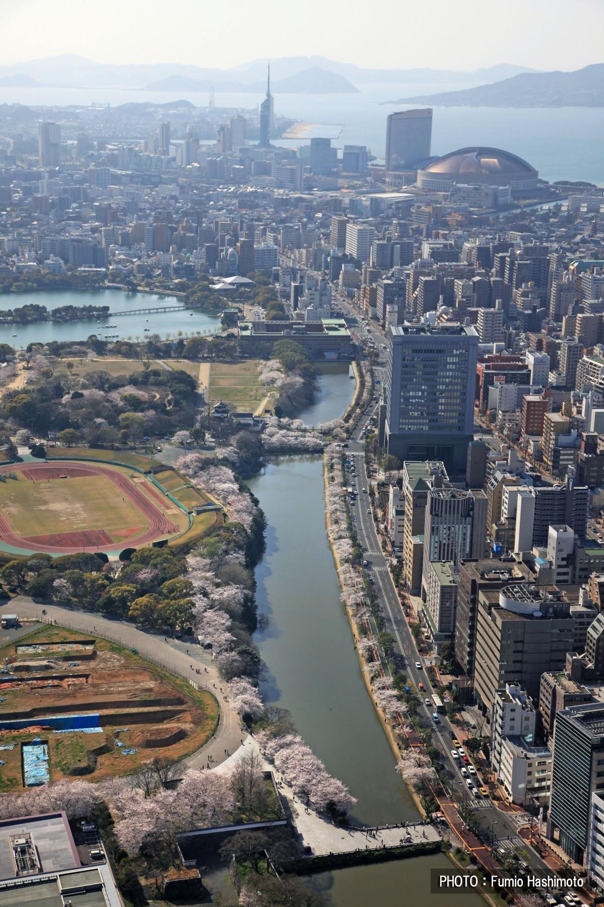 舞鹤公园(2009)图片