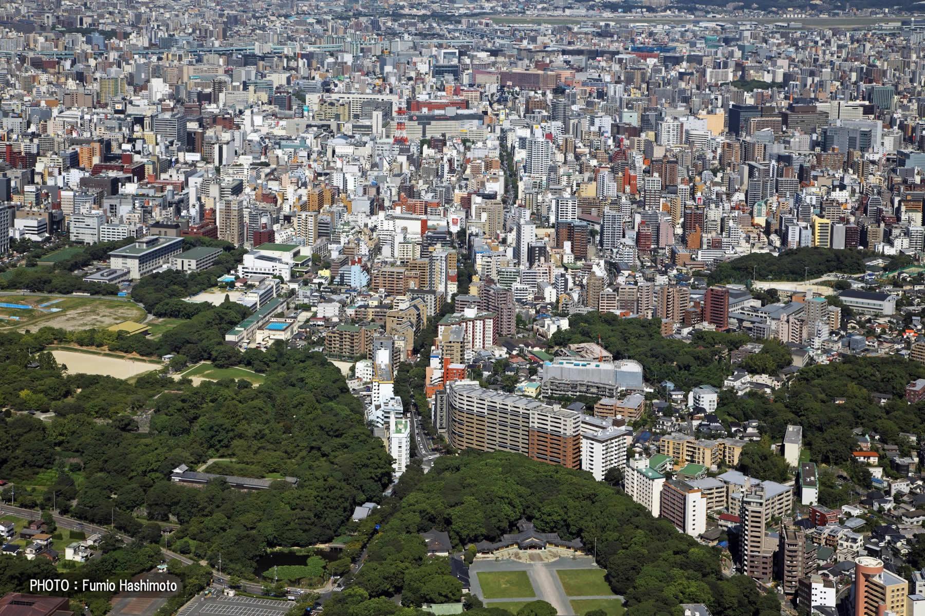 舞鶴公園・けやき通り(2009)の画像