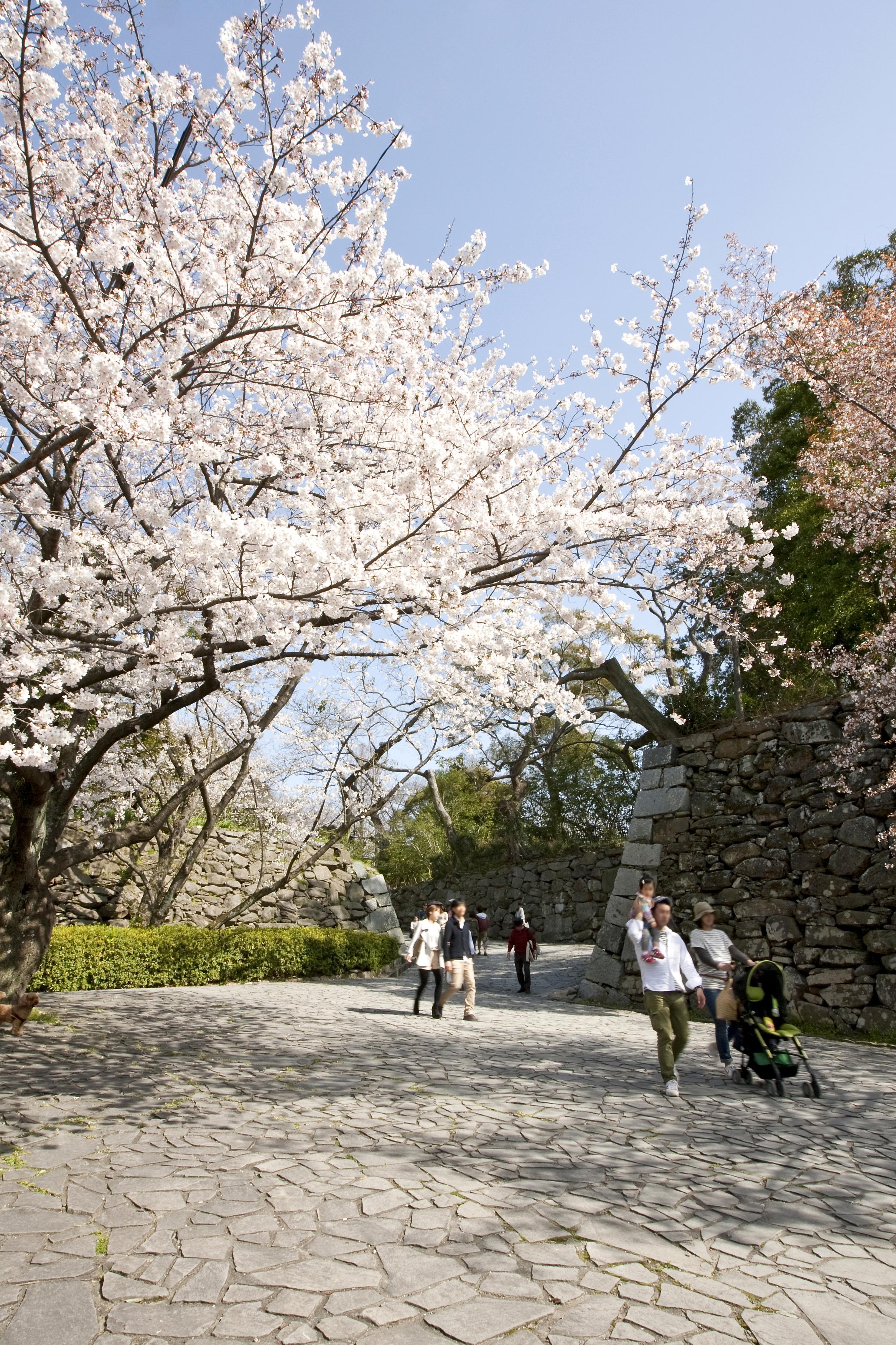 福岡城跡(2012)の画像