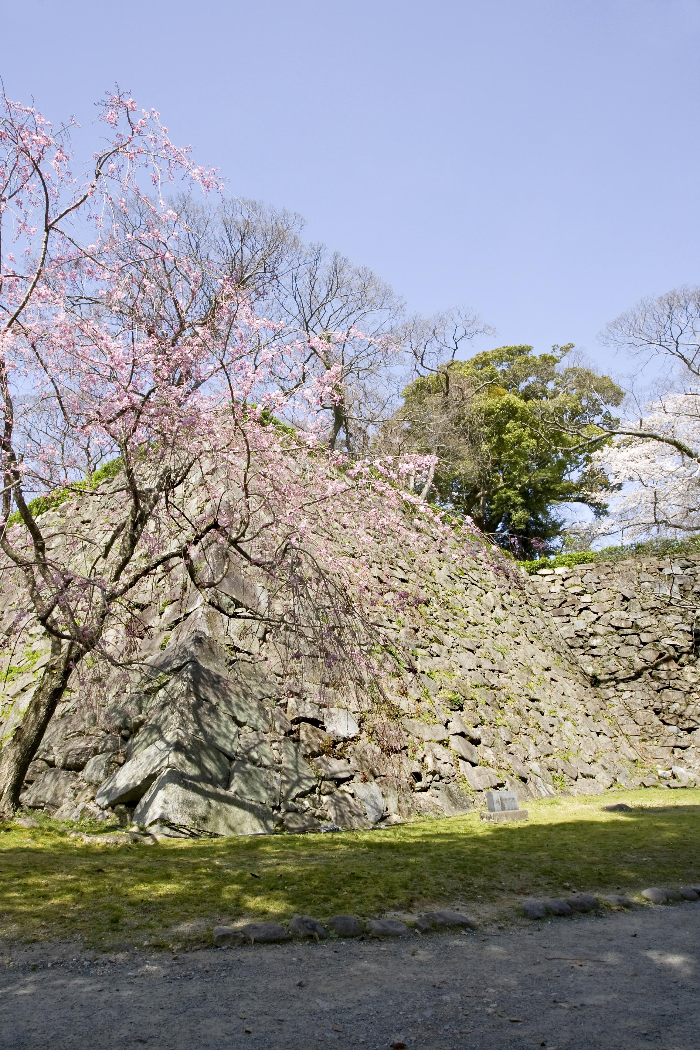 福岡城跡・石垣(2012)の画像