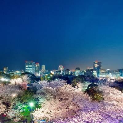 福岡城さくらまつり(2013)の画像