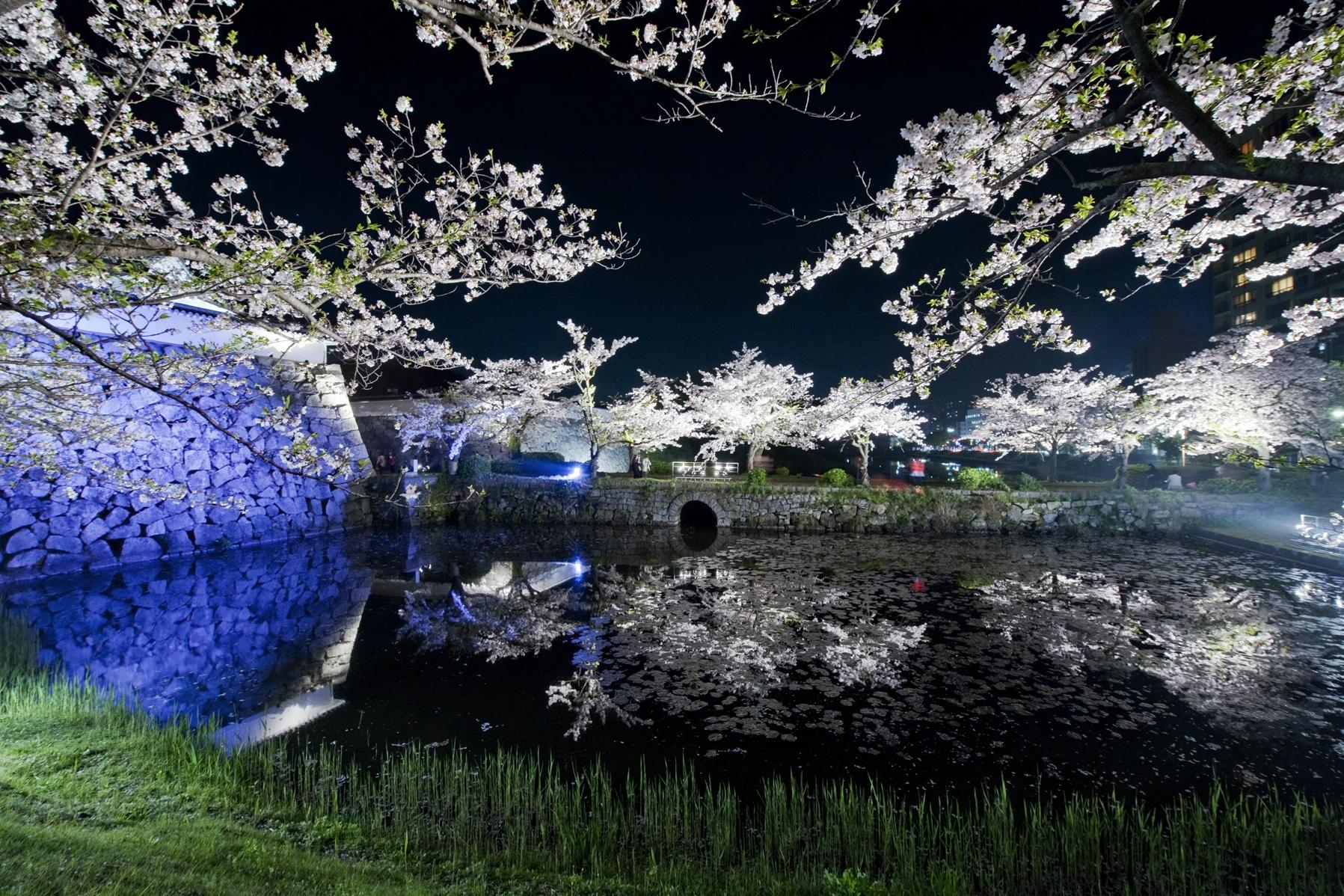 舞鶴公園・桜(2014)の画像