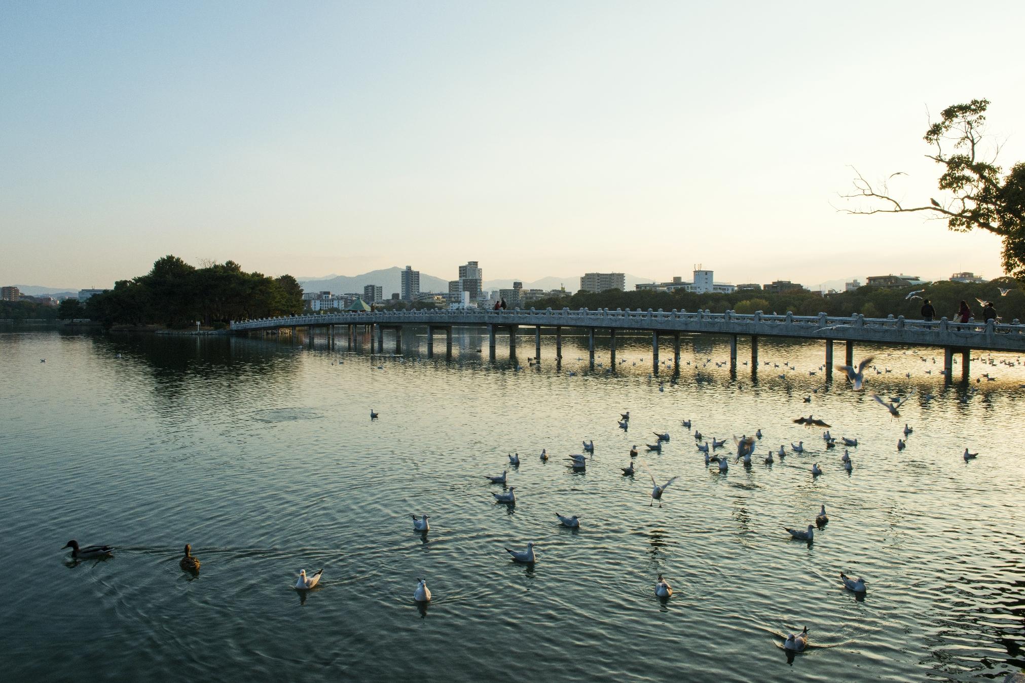 大濠公園(2013)の画像