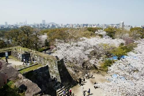 福岡城さくらまつり(2014)の画像