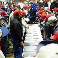 鮮魚市場(2013)の画像