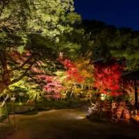 博多ライトアップウォーク・承天寺(2014)の画像