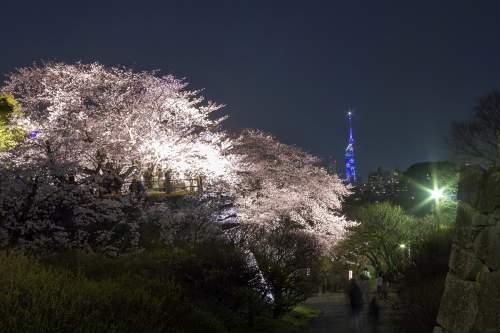 福岡城さくらまつり(2015)の画像