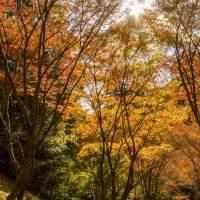 油山市民の森(2014)の画像