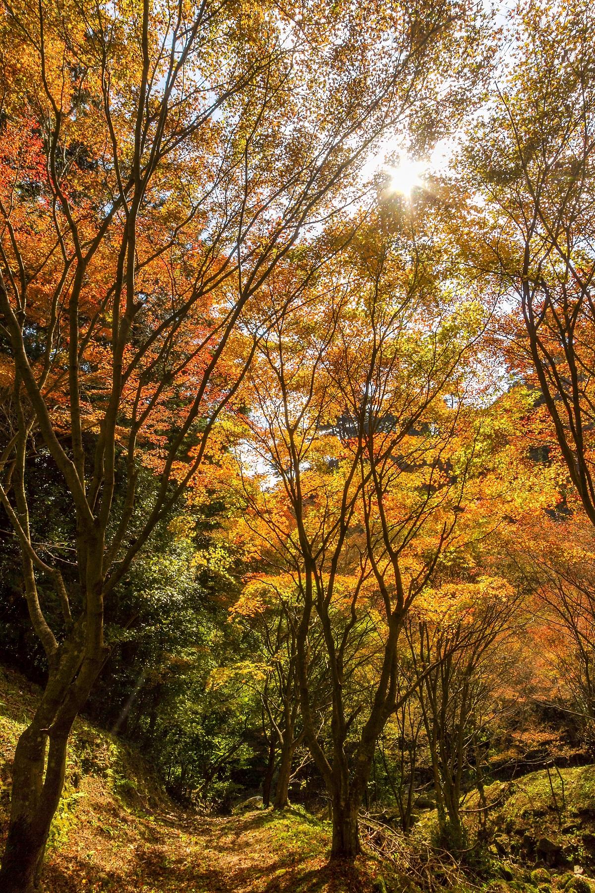 油山市民森林(2014)图片