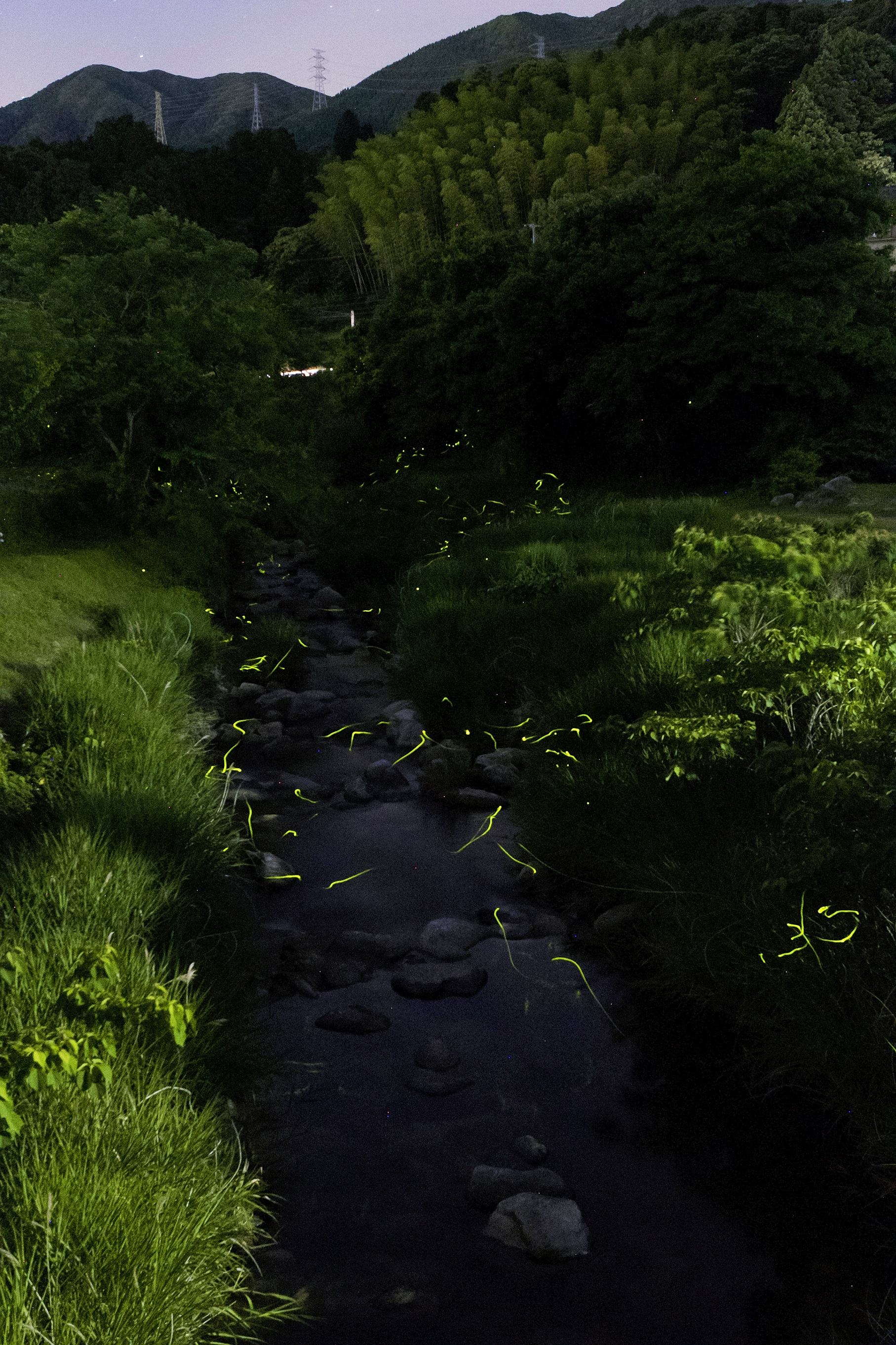 ホタル(石釜)(2015)の画像