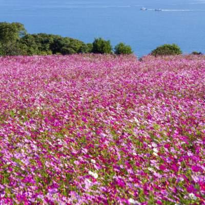 能古島・アイランドパーク(2014)の画像