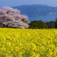 Image of Nokonoshima Island(2015)