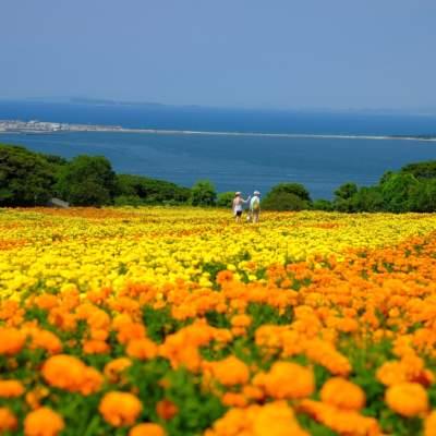 Image of Nokonoshima Island Park