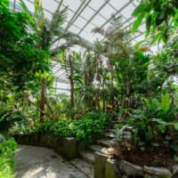 福岡市植物園温室(2019)の画像