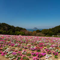 能古島(2019)の画像